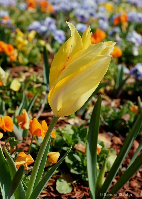 Spring Emerging