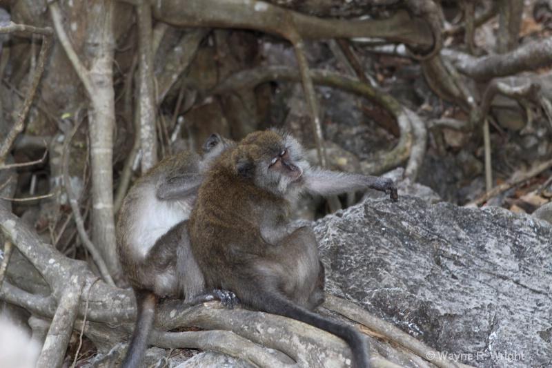 monkey island scratched