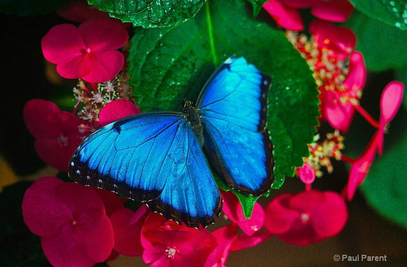 My Blue Friend