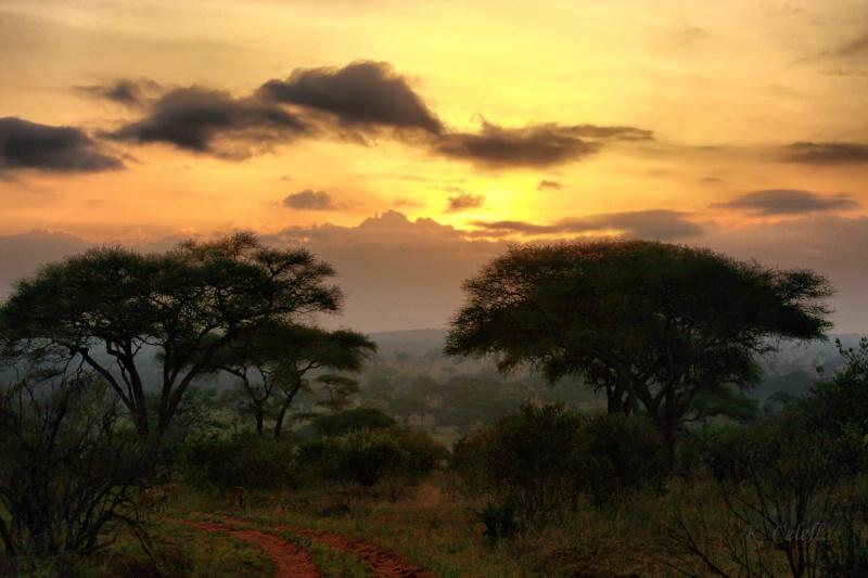 Tanzanian Sunset