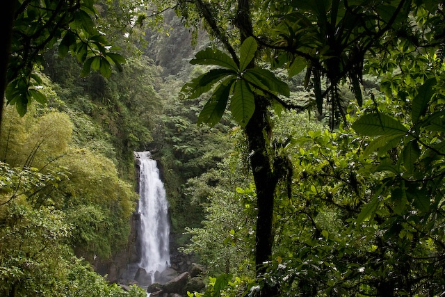Thriving rain forest in Dominica