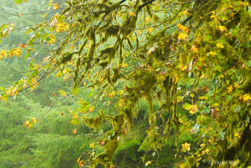 quinault rains-2