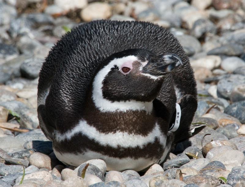 Penguin SF Zoo