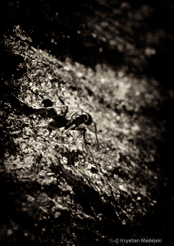 Marching ant