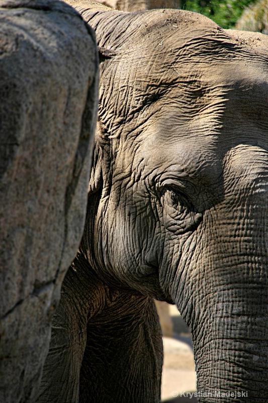 Stony elephant