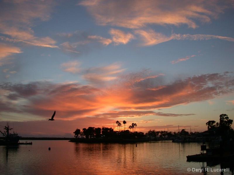 Dana Point Sea Gull Sunset