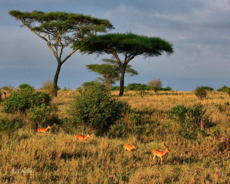 Thriving Impala Family
