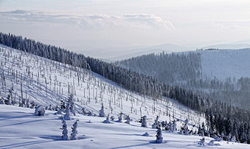 Szczyrk Poland spoiled forest