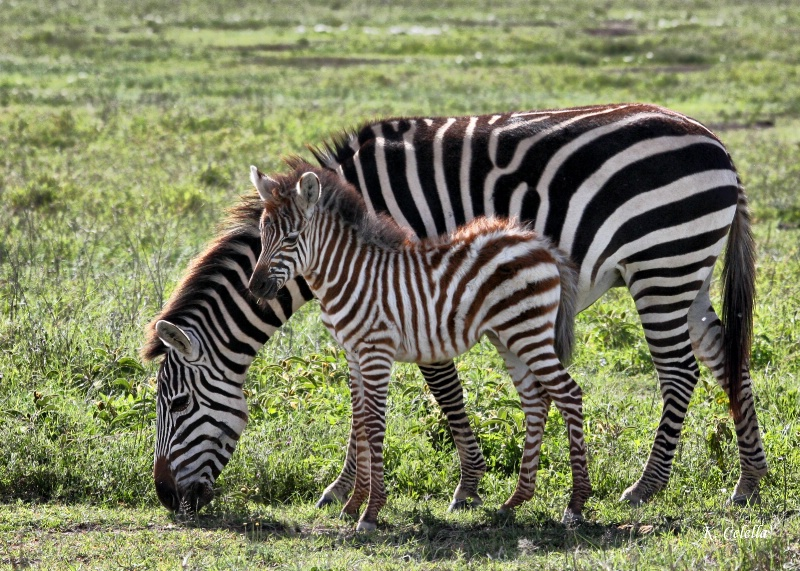 Mother and Baby Stripes