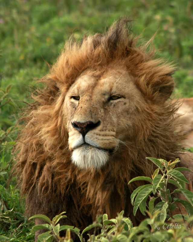 Bed Head in Ngorongoro Crater