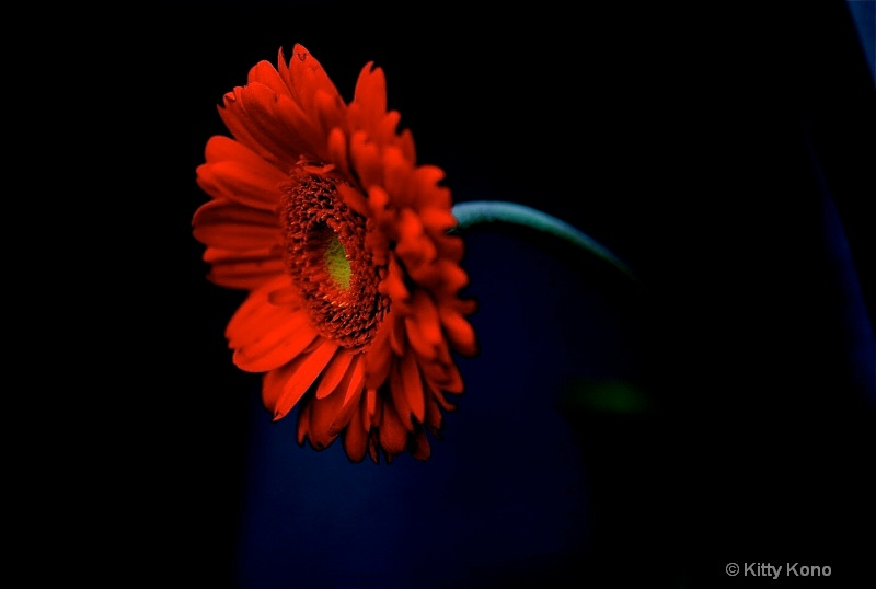 Orange Magic