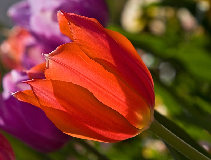 Spring's Aglow