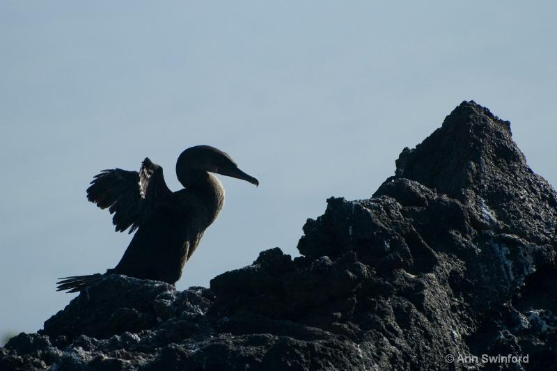 Flgithless cormorant