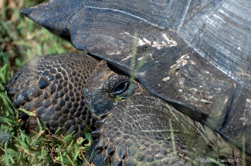 Galapagos detail
