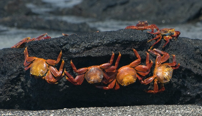 Crab conference