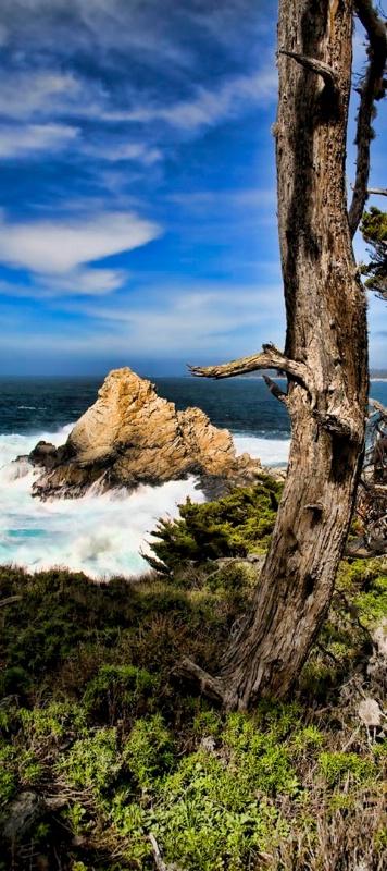 Point Lobos 2