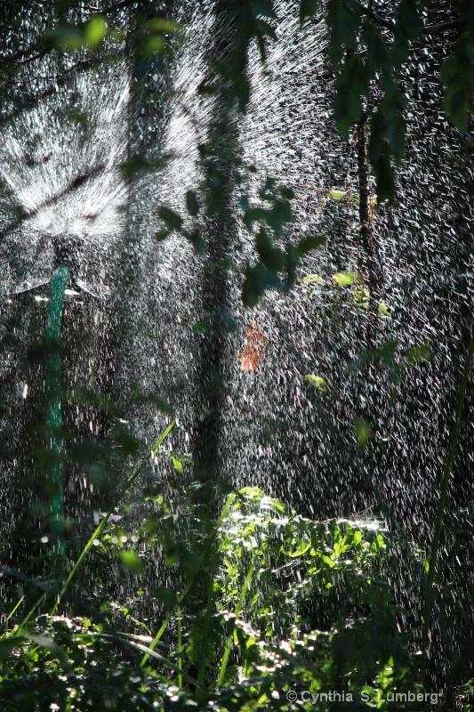 Backyard Rain forest 3