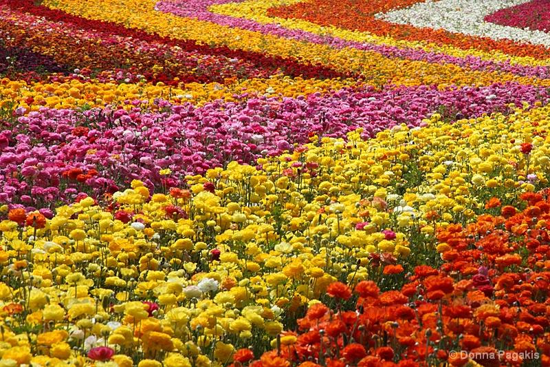 Design in Flowers