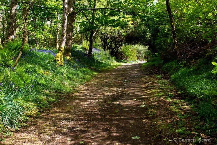 Bluebell Trail, Isle of Skye