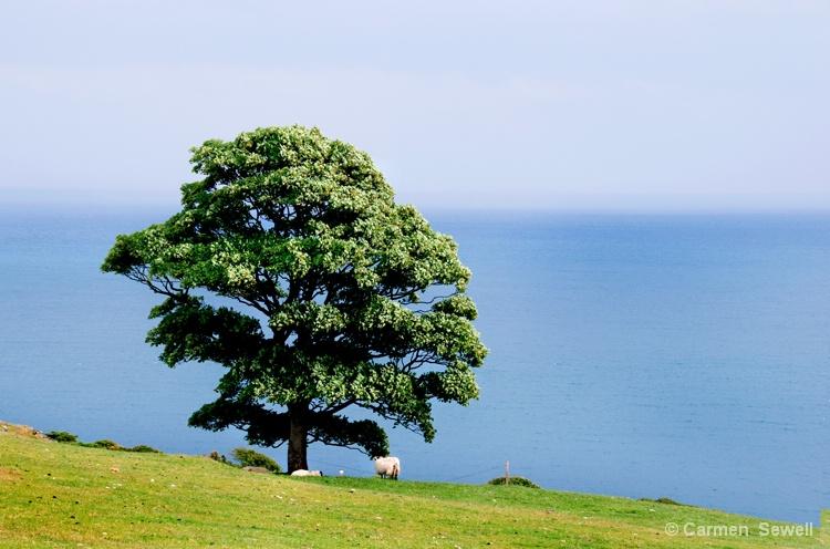 Tree on Tor Head