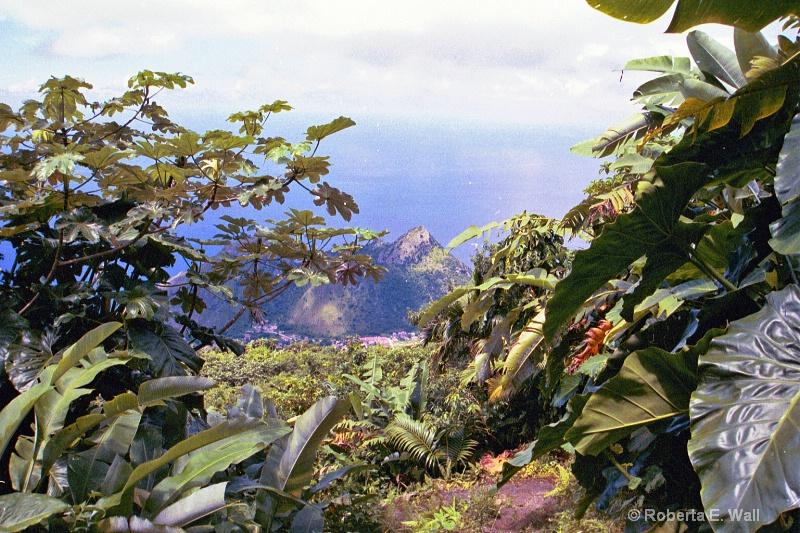 Mt. Scenery climb