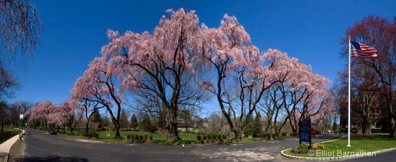 Baldwin in Spring