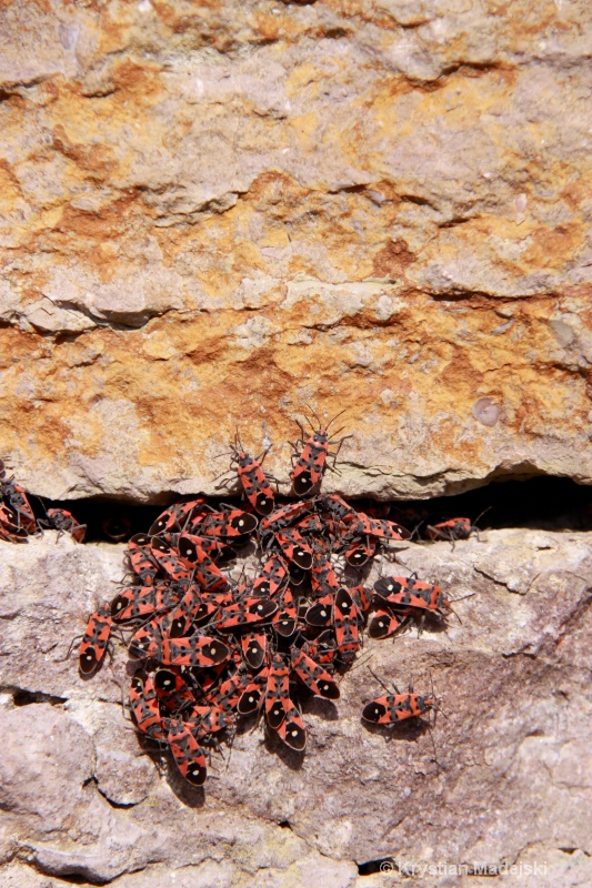 Colourful bugs on the stony wall
