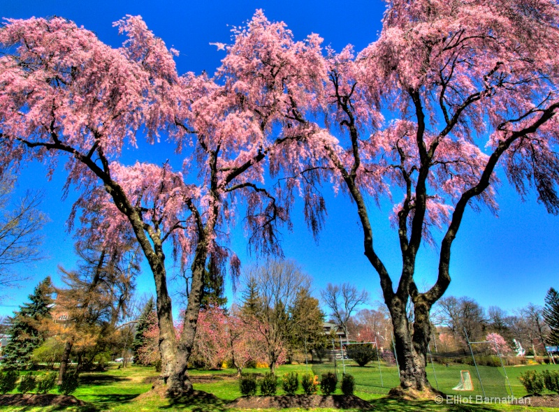 trees in pink 3