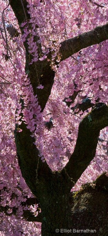 trees in pink