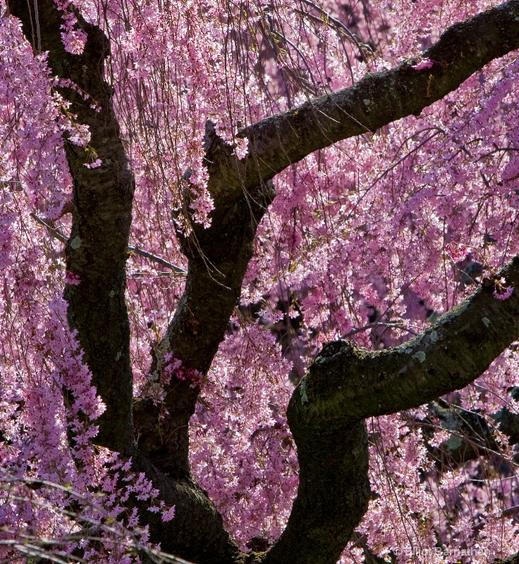 Trees in pink 2