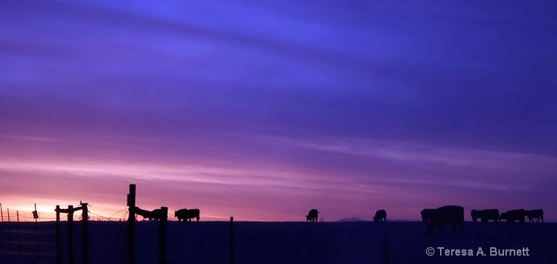 ~ When The Cows Come Home ~