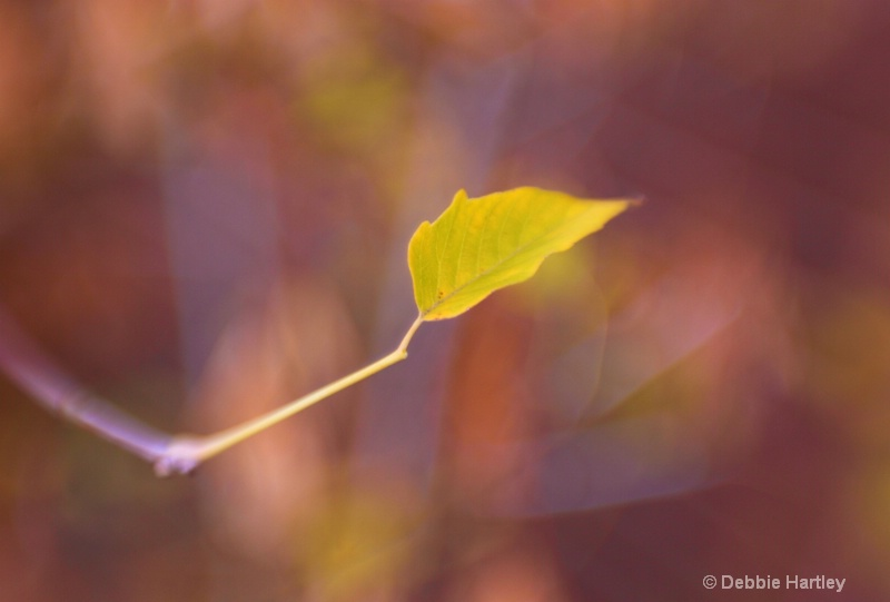 leaf wide