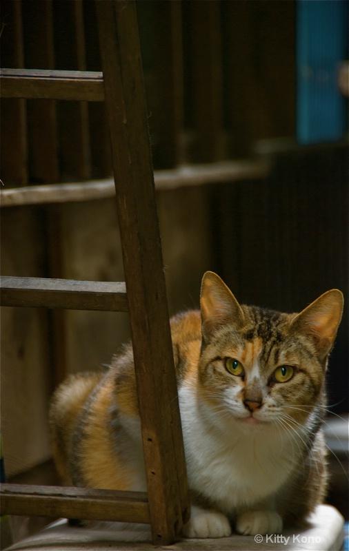 Kitty with Orange Ears - Road to Nishimachi