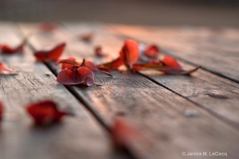 Sunset Petals