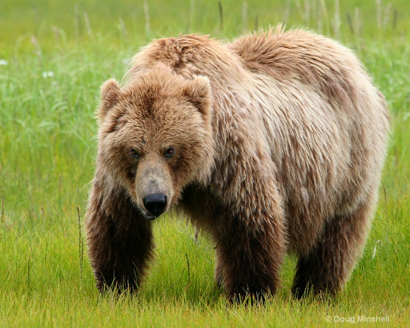 Brown Bear annoyed.