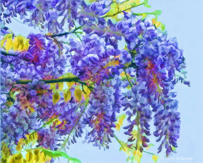Painted Wisteria