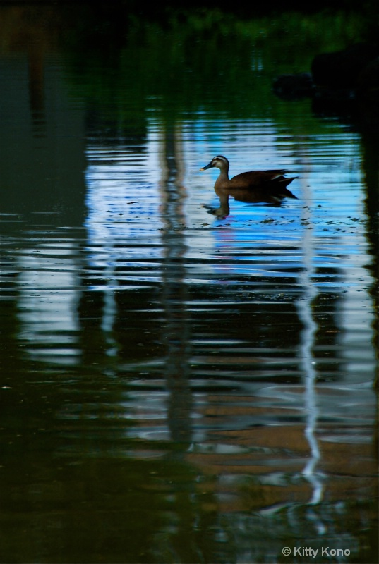 Duck in Blue Reflection