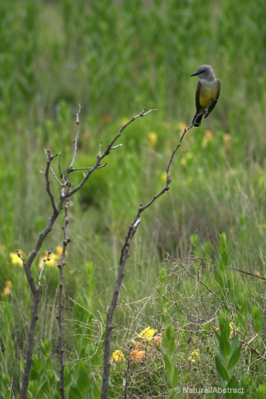 landmark perch