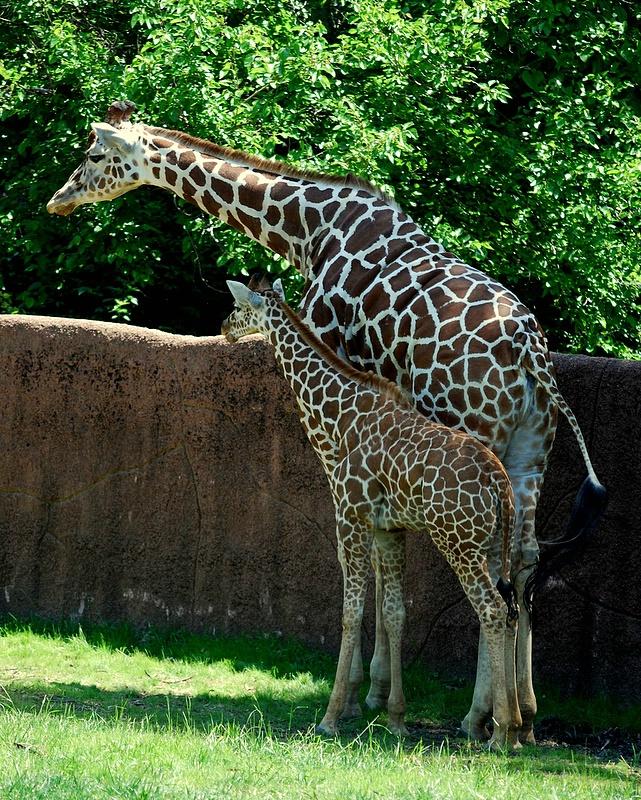 family photos - St Louis Zoo