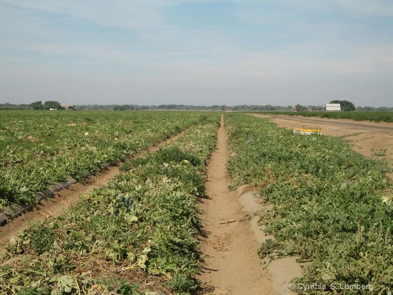 Farmland - Patterson, CA