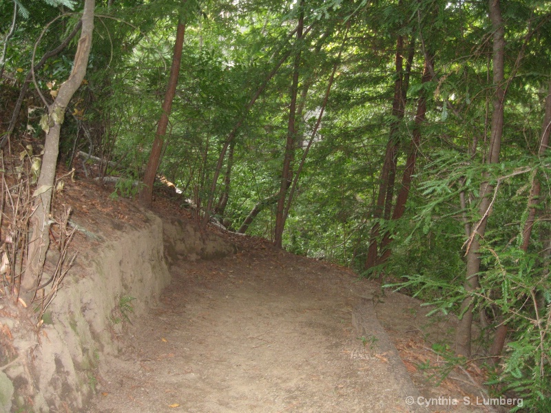 The wooded Trail