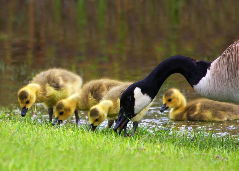 New Family Life