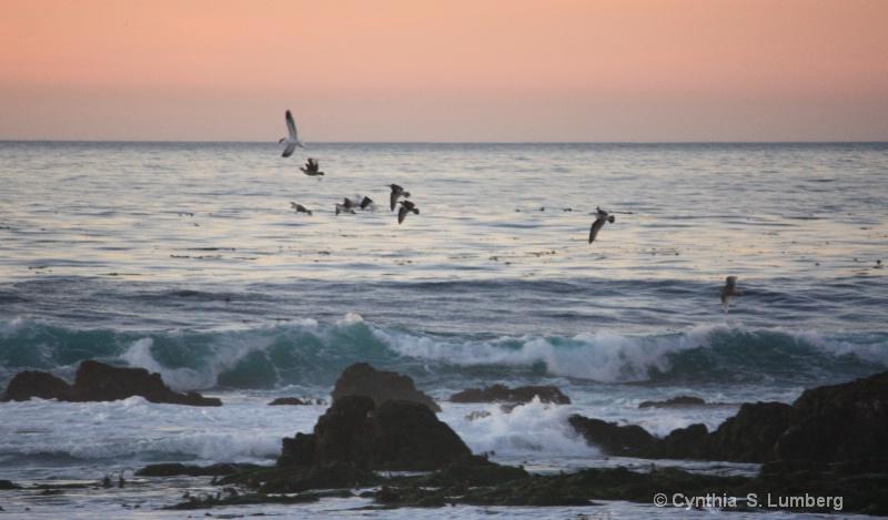 Segulls at Sunset