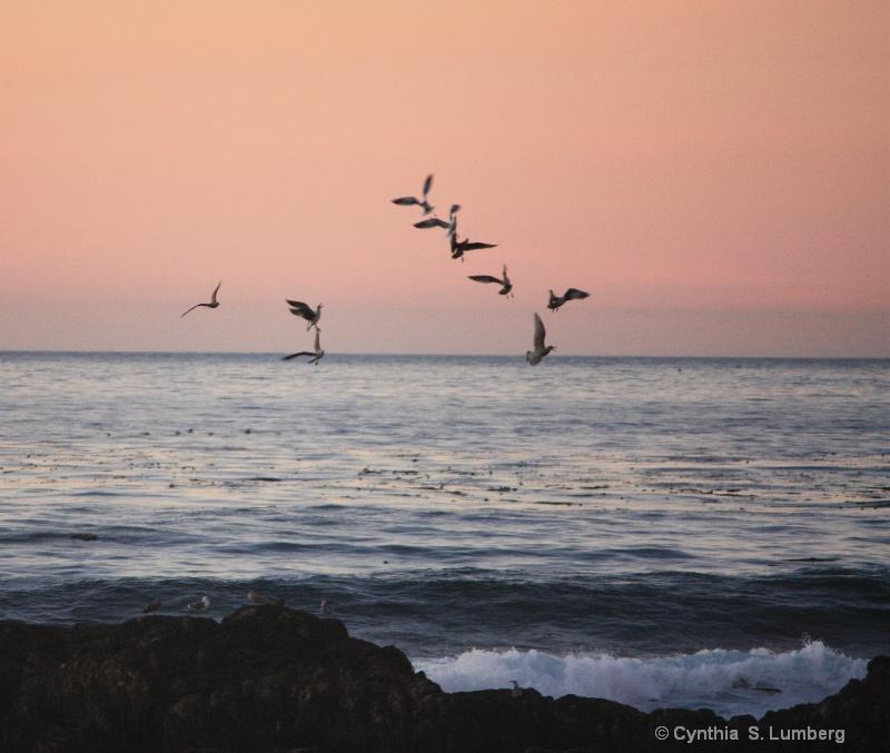 Seagulls at Sunset 2