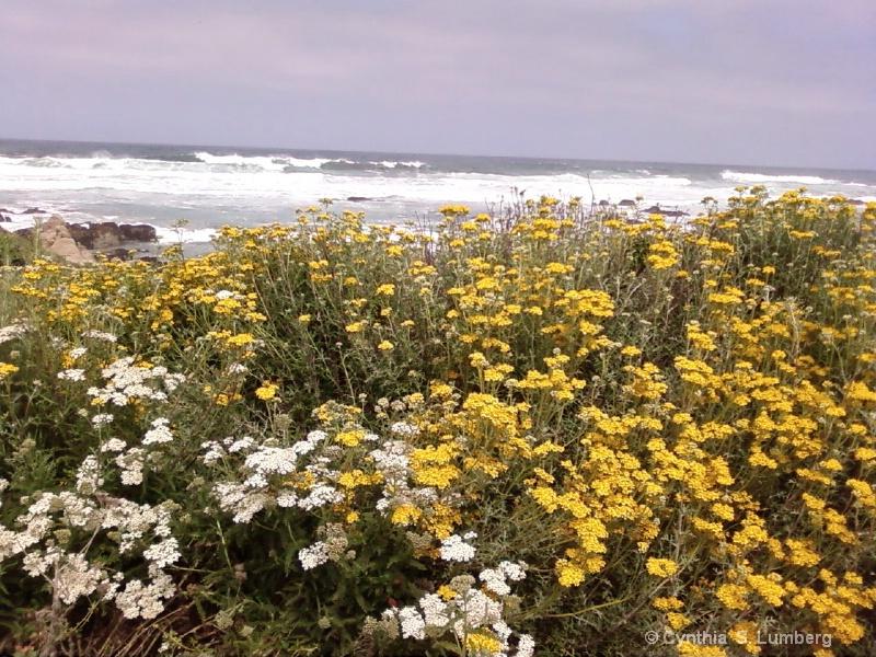Springtime at the Ocean