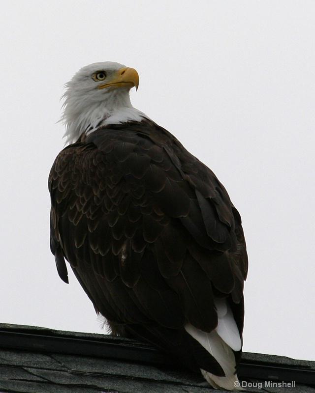 Cathy Bates the Eagle