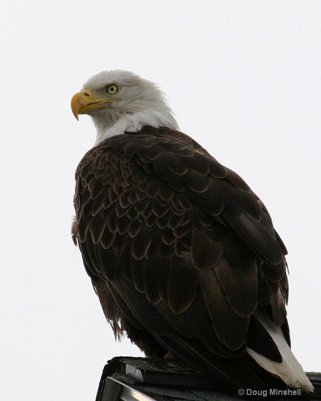 Bald Eagle Lookout