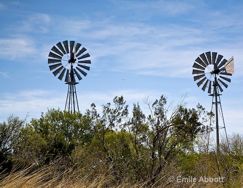Wind swept grass and dos Windmills