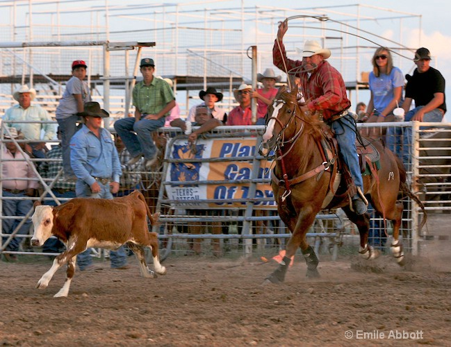 Out the chute for calf roping