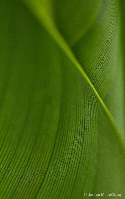 Banana Leaf #1